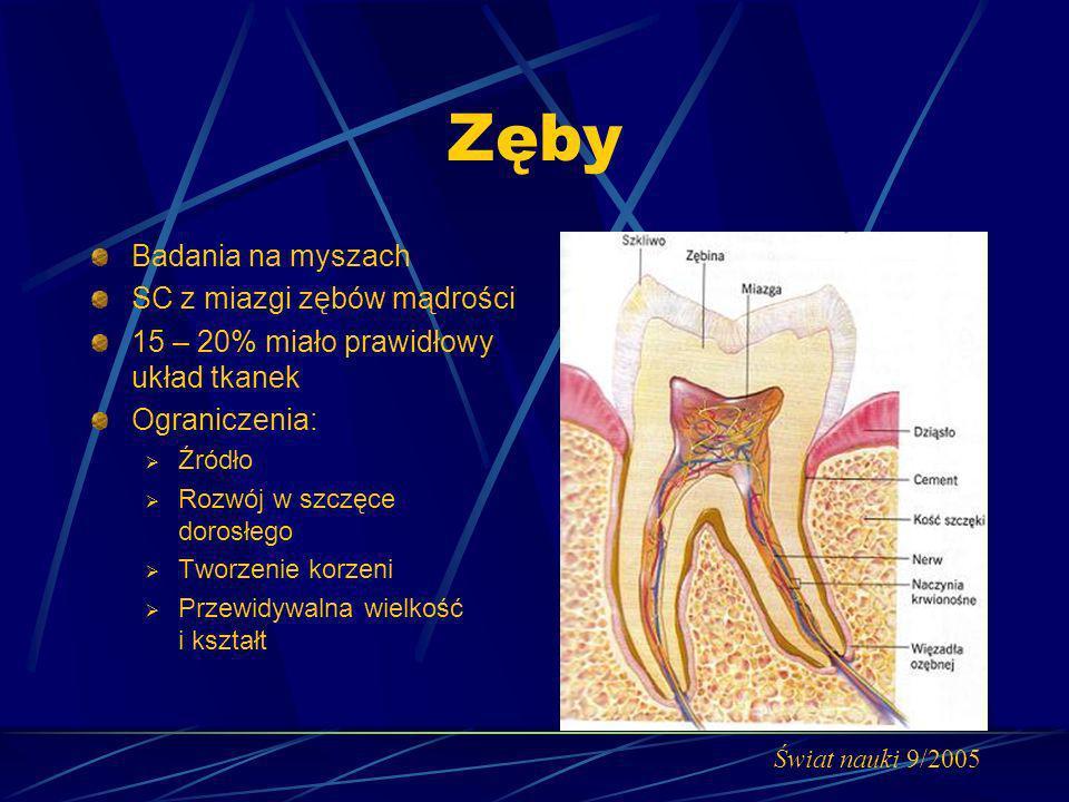 Zęby Badania na myszach SC z miazgi zębów mądrości 15 – 20% miało prawidłowy układ tkanek Ograniczenia: Źródło Rozwój w szczęce dorosłego Tworzenie ko
