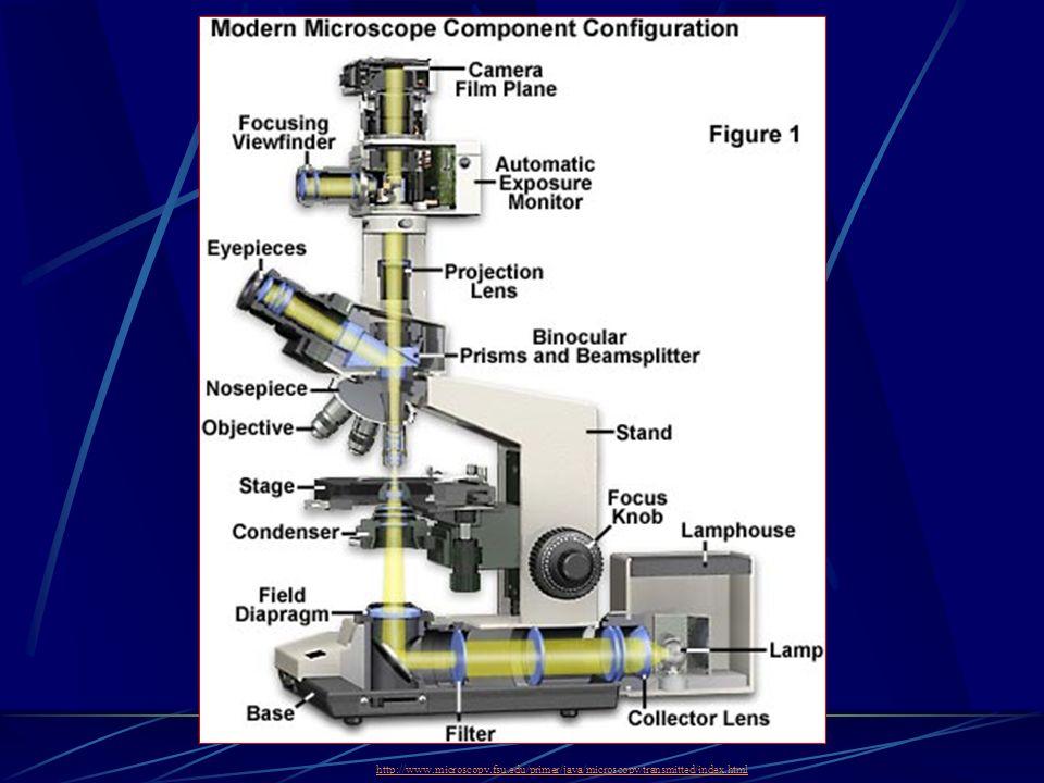 http://www.microscopy.fsu.edu/primer/java/microscopy/transmitted/index.html