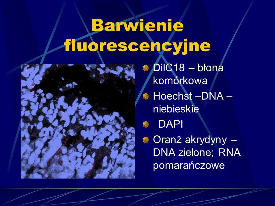 Barwienie fluorescencyjne DiIC18 – błona komórkowa Hoechst –DNA – niebieskie DAPI Oranż akrydyny – DNA zielone; RNA pomarańczowe