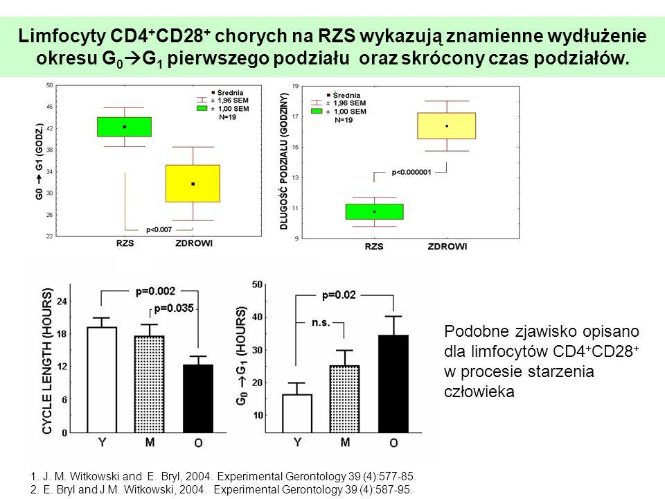 Limfocyty CD4 + CD28 + chorych na RZS wykazują znamienne wydłużenie okresu G 0 G 1 pierwszego podziału oraz skrócony czas podziałów. 1. J. M. Witkowsk
