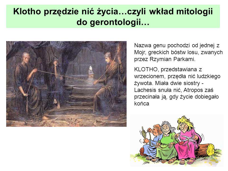 Klotho przędzie nić życia…czyli wkład mitologii do gerontologii… Nazwa genu pochodzi od jednej z Mojr, greckich bóstw losu, zwanych przez Rzymian Park
