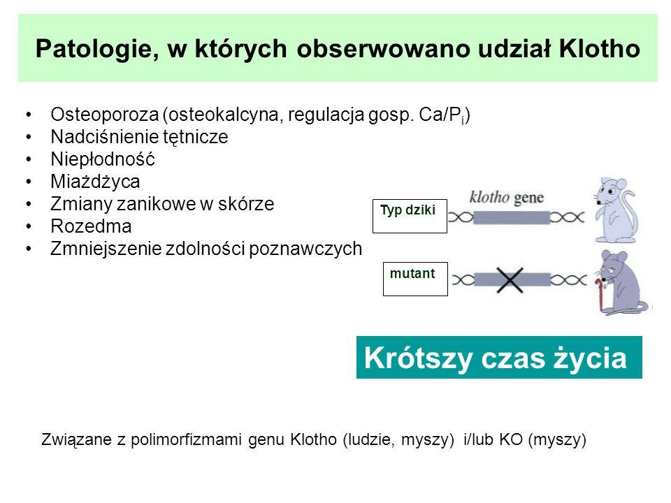 Patologie, w których obserwowano udział Klotho Osteoporoza (osteokalcyna, regulacja gosp. Ca/P i ) Nadciśnienie tętnicze Niepłodność Miażdżyca Zmiany