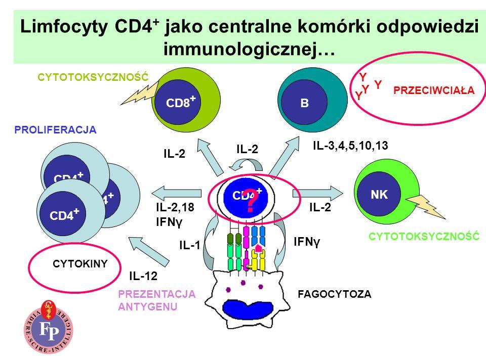 Limfocyty CD4 + jako centralne komórki odpowiedzi immunologicznej… CD8 + B NK Y Y Y Y PRZECIWCIAŁA CYTOKINY IL-2,18 IFNγ IL-2 IL-3,4,5,10,13 IL-12 IL-