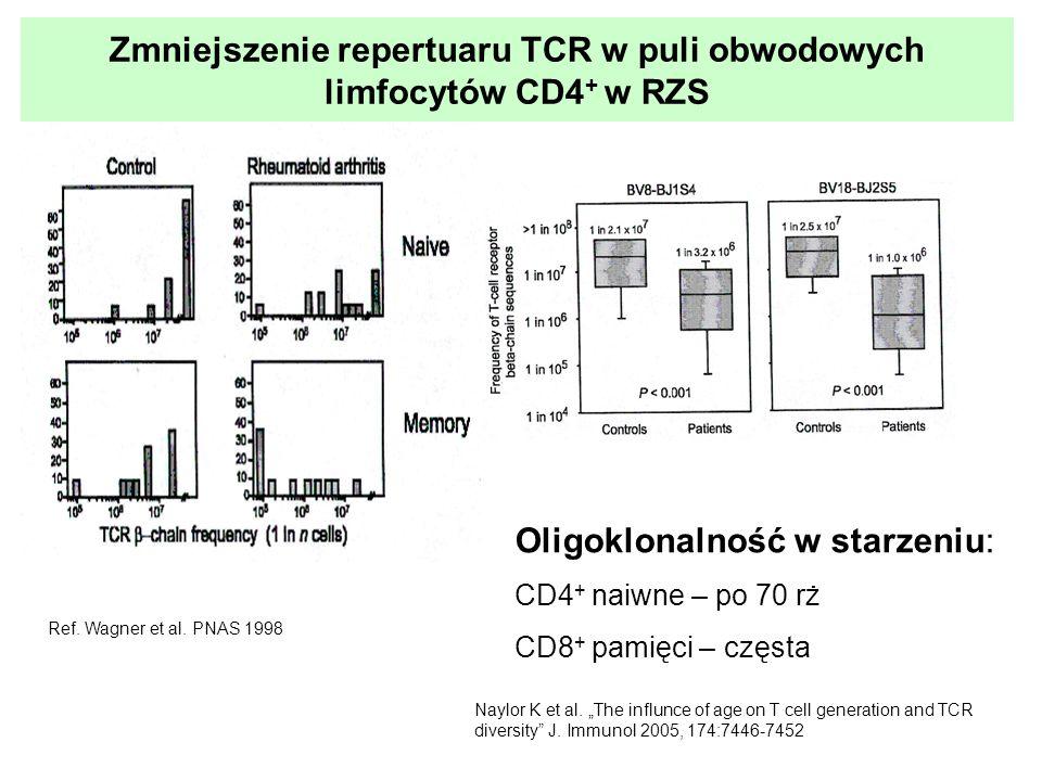 Zmiany w limfocytach CD4 + krwi obwodowej u pacjentów z RZS - podsumowanie Zwiększony odsetek komórek CD4 + CD28 - Obniżenie ekspresji cząsteczek CD28 na limfocytach CD4 + (CD4 + CD28 + ) – mniejsza liczba receptorów Zmieniona odpowiedź proliferacyjna na stymulację in vitro Ograniczony repertuar receptora TCR Obniżona liczba TRECs (ang.