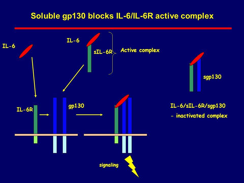 Soluble gp130 blocks IL-6/IL-6R active complex IL-6 IL-6R gp130 sIL-6R signaling sgp130 IL-6 Active complex IL-6/sIL-6R/sgp130 - inactivated complex