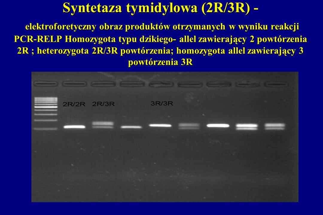 Syntetaza tymidylowa (2R/3R) - elektroforetyczny obraz produktów otrzymanych w wyniku reakcji PCR-RELP Homozygota typu dzikiego- allel zawierający 2 p