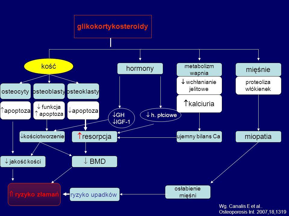 glikokortykosteroidy kość hormony metabolizm wapnia mięśnie wchłanianie jelitowe proteoliza włókienek apoptoza funkcja apoptoza osteocytyosteoblastyos