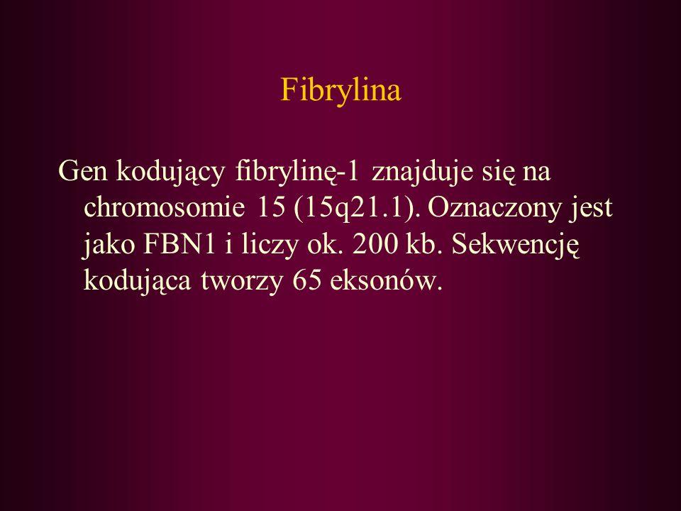 Fibrylina Gen kodujący fibrylinę-1 znajduje się na chromosomie 15 (15q21.1). Oznaczony jest jako FBN1 i liczy ok. 200 kb. Sekwencję kodująca tworzy 65