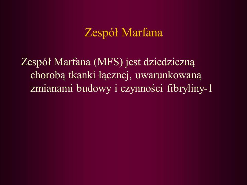 Zespół Marfana (MFS) jest dziedziczną chorobą tkanki łącznej, uwarunkowaną zmianami budowy i czynności fibryliny-1