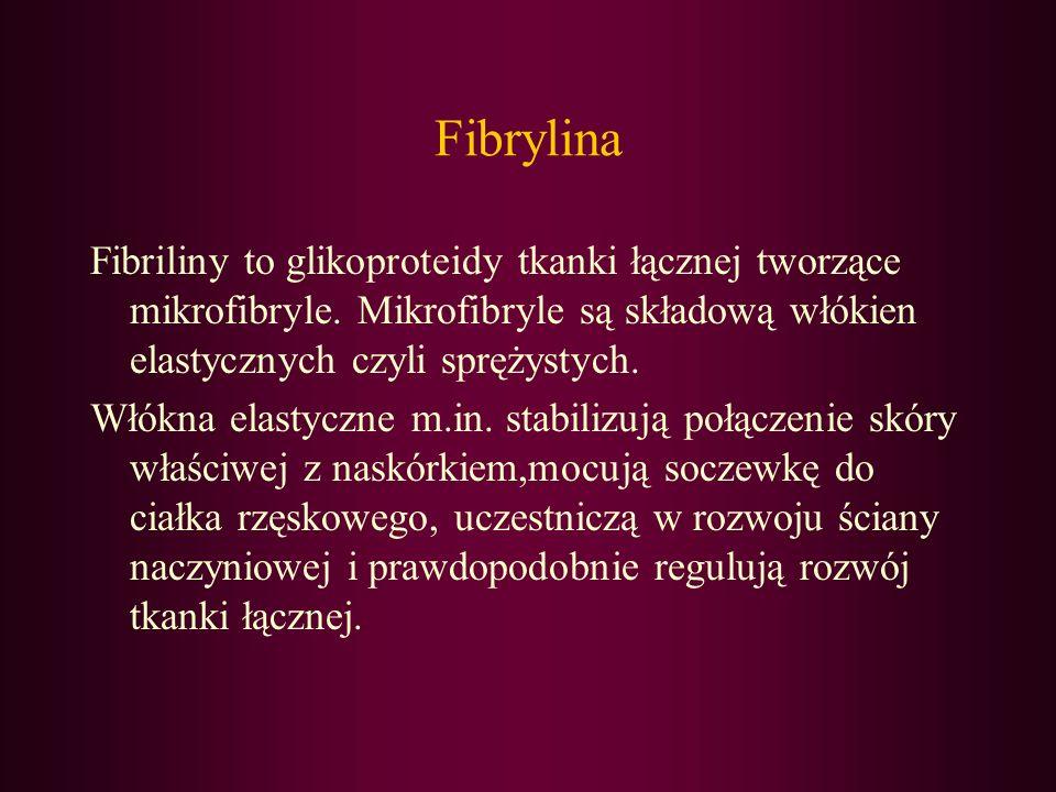 Fibrylina Fibriliny to glikoproteidy tkanki łącznej tworzące mikrofibryle. Mikrofibryle są składową włókien elastycznych czyli sprężystych. Włókna ela
