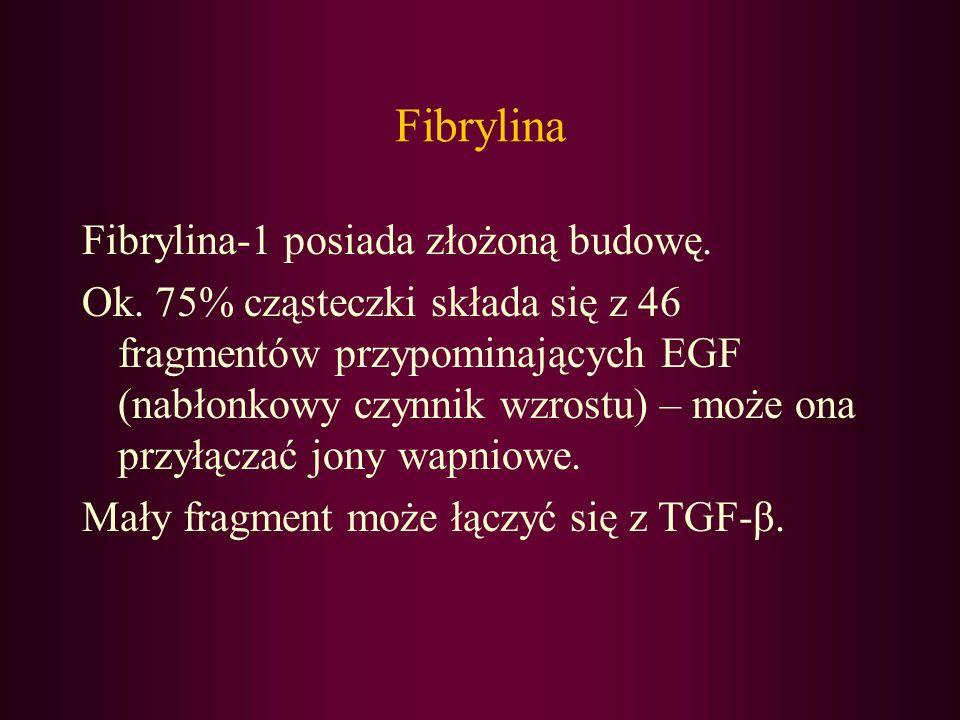 Fibrylina Fibrylina-1 posiada złożoną budowę. Ok. 75% cząsteczki składa się z 46 fragmentów przypominających EGF (nabłonkowy czynnik wzrostu) – może o