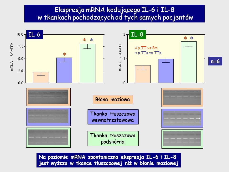 Błona maziowa Tkanka tłuszczowa wewnątrzstawowa Tkanka tłuszczowa podskórna p TT vs Bm p TTs vs TTp n=6 IL-6IL-8 Ekspresja mRNA kodującego IL-6 i IL-8