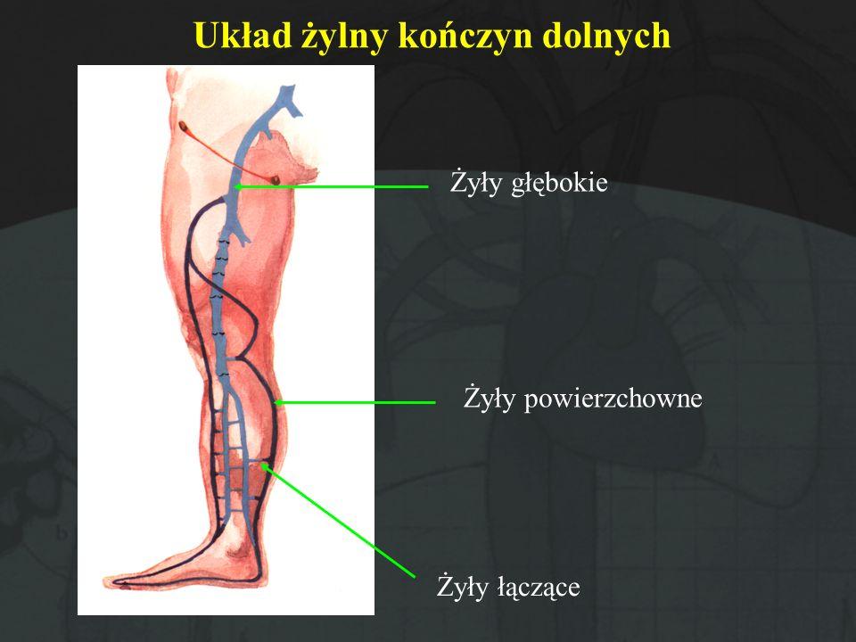 Układ żylny kończyn dolnych Żyły głębokie Żyły powierzchowne Żyły łączące