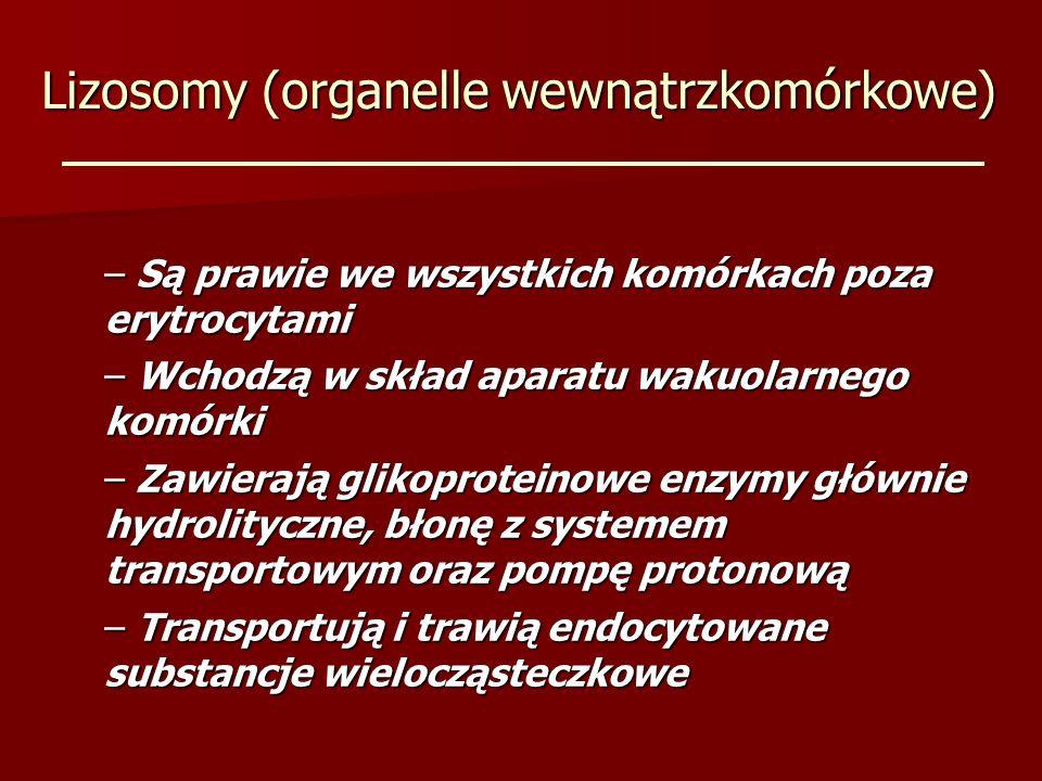 Lizosomy (organelle wewnątrzkomórkowe) – Są prawie we wszystkich komórkach poza erytrocytami – Wchodzą w skład aparatu wakuolarnego komórki – Zawieraj