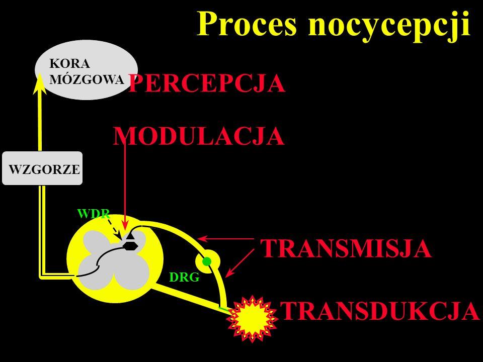 MODULACJA DRG TRANSMISJA KORA MÓZGOWA PERCEPCJA Proces nocycepcji WDR TRANSDUKCJA WZGORZE