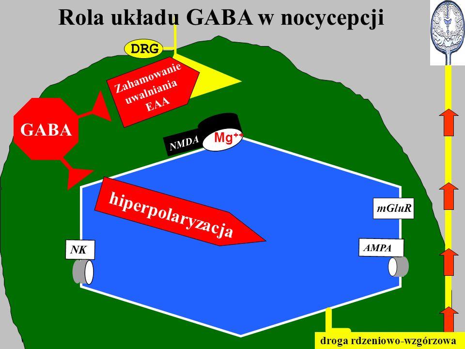 DRG Rola układu GABA w nocycepcji NMDA mGluR AMPA NK Mg ++ droga rdzeniowo-wzgórzowa GABA hiperpolaryzacja Zahamowanie uwalniania EAA