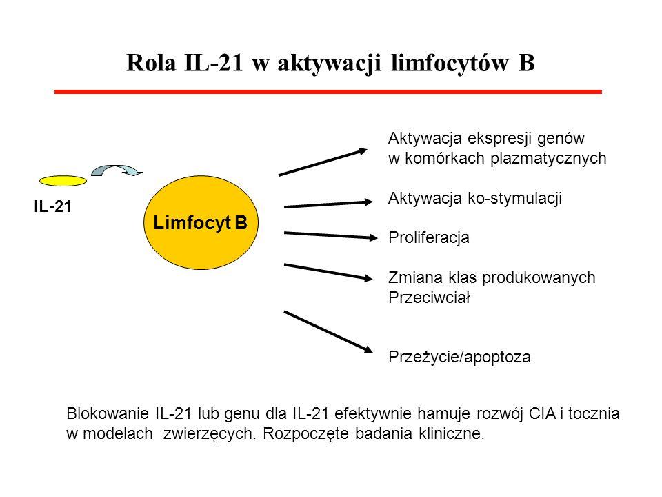 Rola IL-21 w aktywacji limfocytów B IL-21 Limfocyt B Aktywacja ekspresji genów w komórkach plazmatycznych Aktywacja ko-stymulacji Proliferacja Zmiana