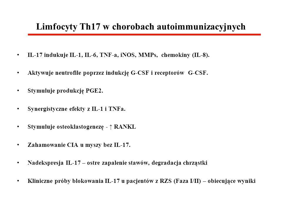 Limfocyty Th17 w chorobach autoimmunizacyjnych IL-17 indukuje IL-1, IL-6, TNF-a, iNOS, MMPs, chemokiny (IL-8). Aktywuje neutrofile poprzez indukcję G-