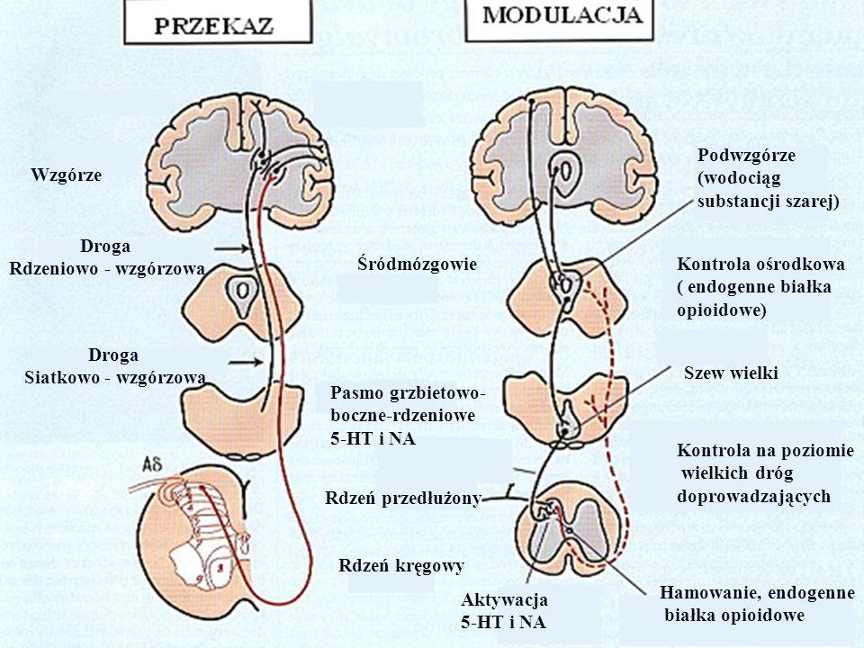 Sensytyzacja ośrodkowa Dysfunkcja w obrębie OUN, w przebiegu której stymulacja na obwodzie zostaje nadmiernie wzmocniona i prowadzi do nieadekwatnej wrażliwości na ból oraz inne wrażenia.