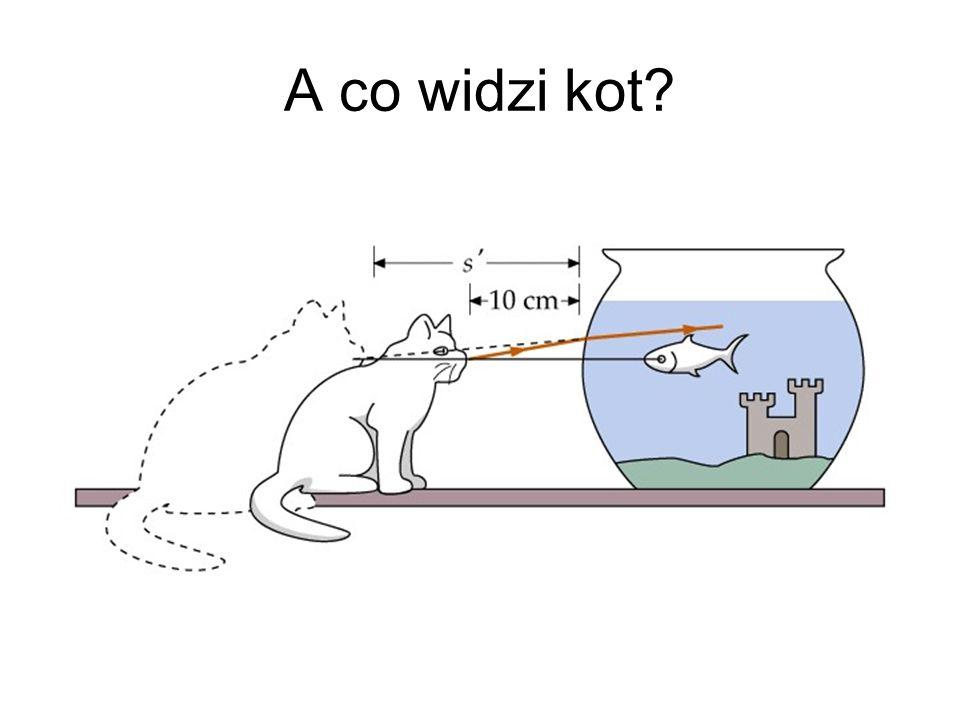 A co widzi kot?