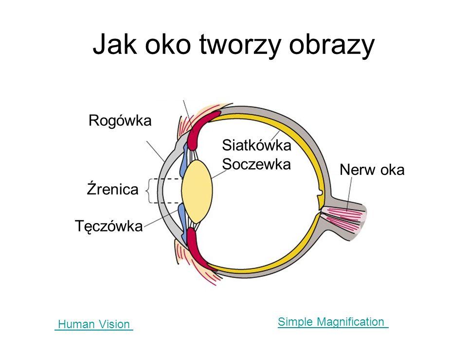 Jak oko tworzy obrazy Human Vision Simple Magnification Rogówka Siatkówka Soczewka Nerw oka Źrenica Tęczówka