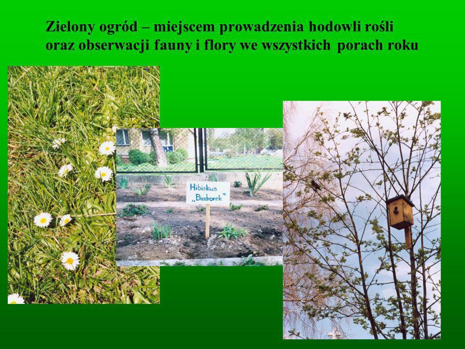 Zielony ogród – miejscem prowadzenia hodowli rośli oraz obserwacji fauny i flory we wszystkich porach roku