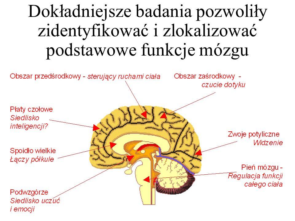 Doskonalenie technik analizy działania mózgu pozwoliło na dokładniejsze określenie tego, w jaki sposób on działa