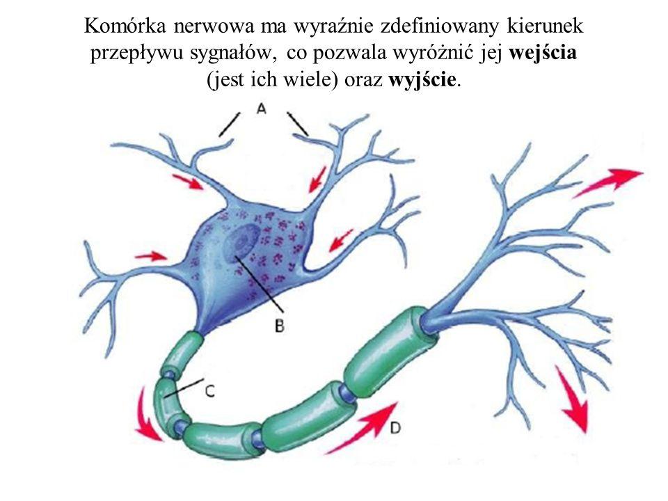 Sztuczna sieć neuronowa, podobnie jak sieci rzeczywiste, zbudowana jest z neuronów