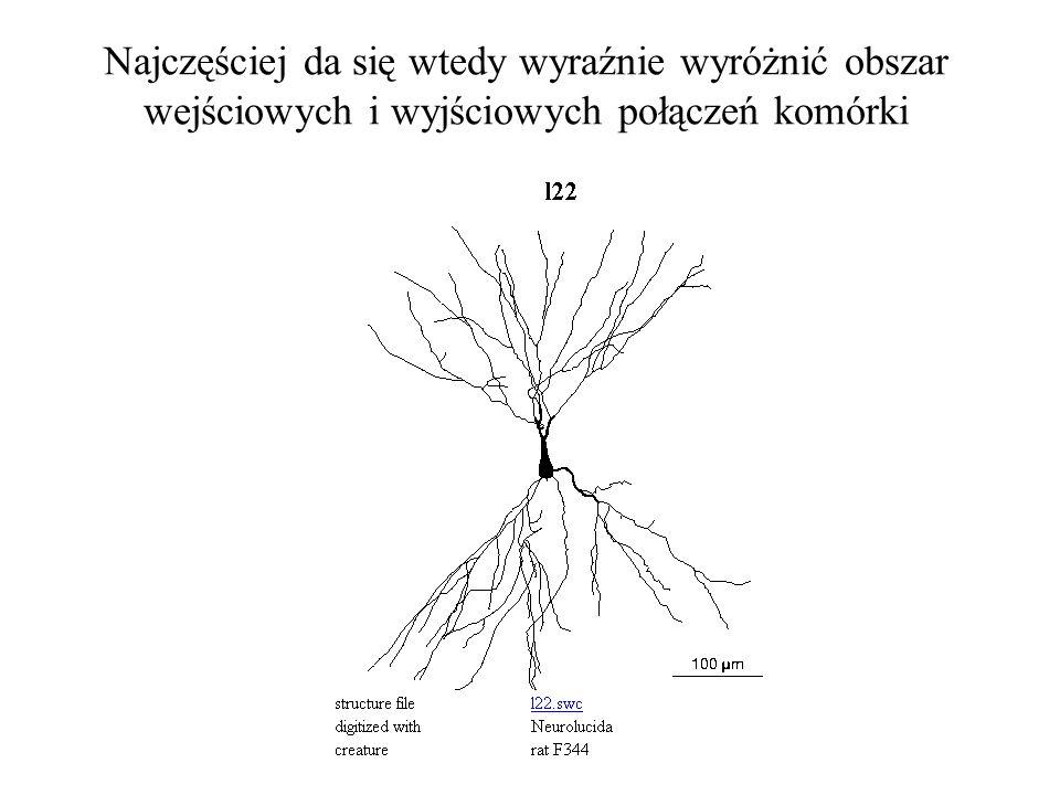 Komórki nerwowe zwykle mają typowy rozgałęziony kształt, z dobrze wyróżnionym drzewkiem dendrytów i z aksonem dającym odgałęzienia do następnych neuro