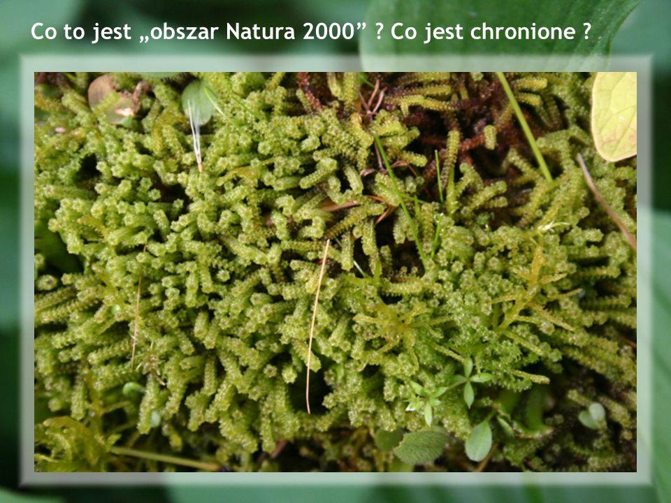 Co to jest obszar Natura 2000 ? Co jest chronione ?