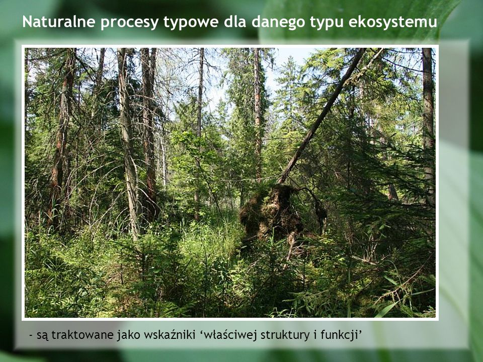 Naturalne procesy typowe dla danego typu ekosystemu - są traktowane jako wskaźniki właściwej struktury i funkcji