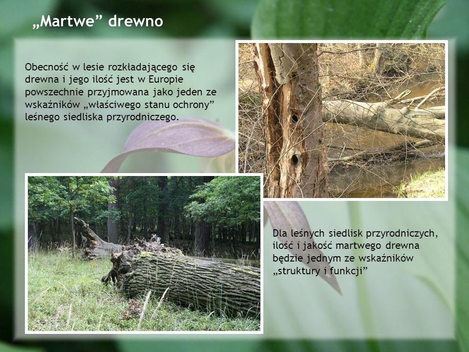 Martwe drewno Fot.M.