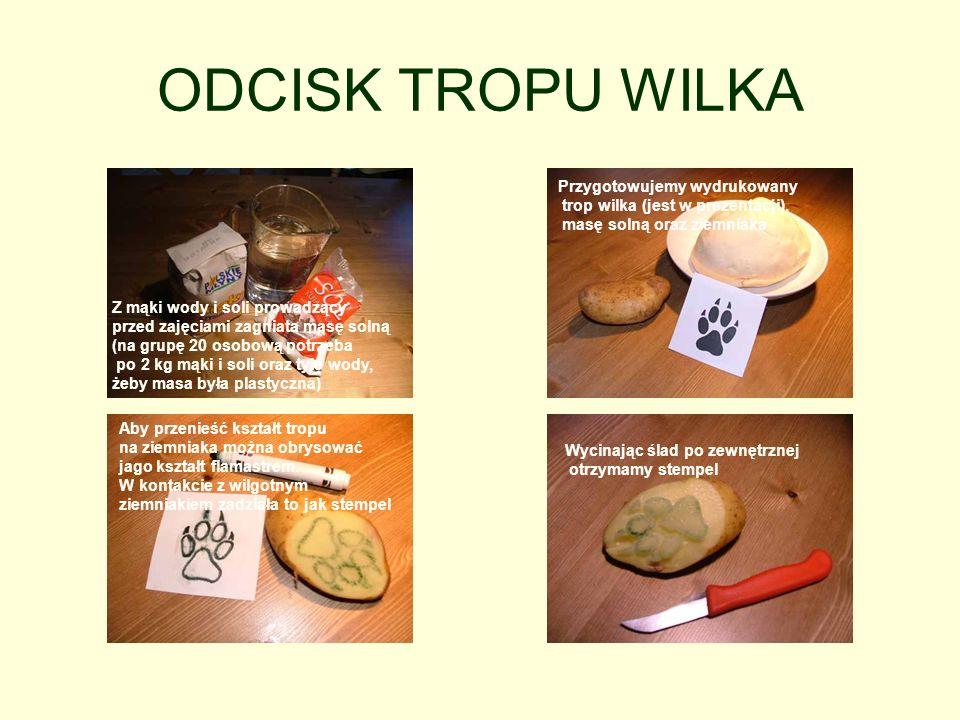 ODCISK TROPU WILKA Z mąki wody i soli prowadzący przed zajęciami zagniata masę solną (na grupę 20 osobową potrzeba po 2 kg mąki i soli oraz tyle wody, żeby masa była plastyczna) Przygotowujemy wydrukowany trop wilka (jest w prezentacji), masę solną oraz ziemniaka Aby przenieść kształt tropu na ziemniaka można obrysować jago kształt flamastrem.