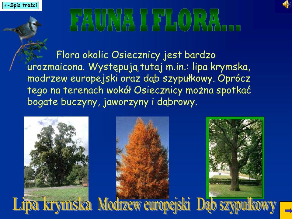 Flora okolic Osiecznicy jest bardzo urozmaicona. Występują tutaj m.in.: lipa krymska, modrzew europejski oraz dąb szypułkowy. Oprócz tego na terenach