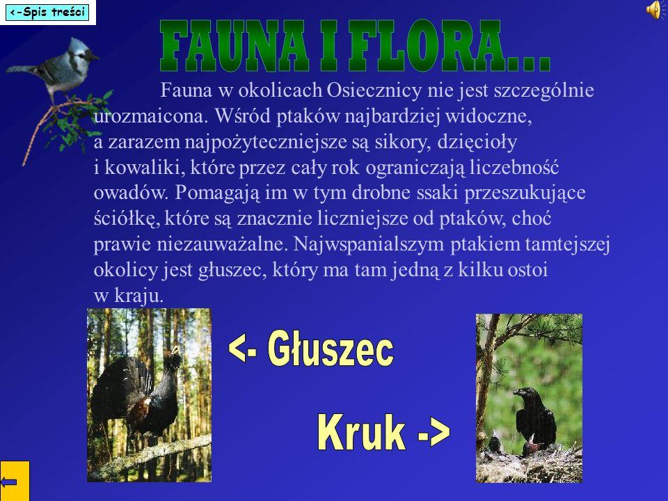 Fauna w okolicach Osiecznicy nie jest szczególnie urozmaicona. Wśród ptaków najbardziej widoczne, a zarazem najpożyteczniejsze są sikory, dzięcioły i