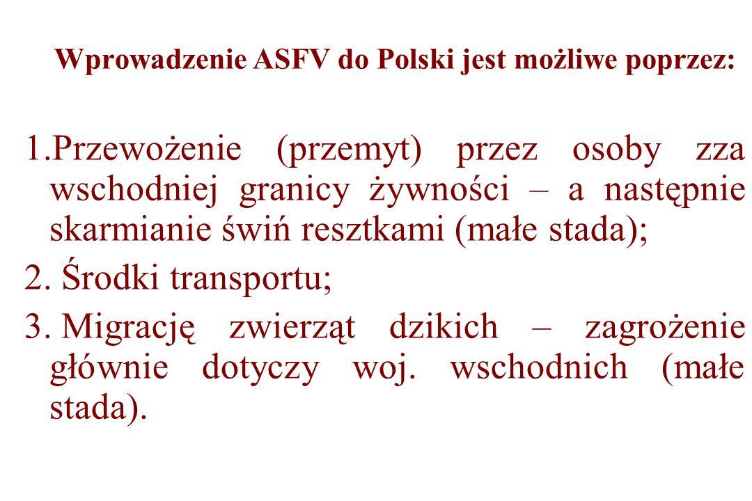 Wprowadzenie ASFV do Polski jest możliwe poprzez: 1.Przewożenie (przemyt) przez osoby zza wschodniej granicy żywności – a następnie skarmianie świń re