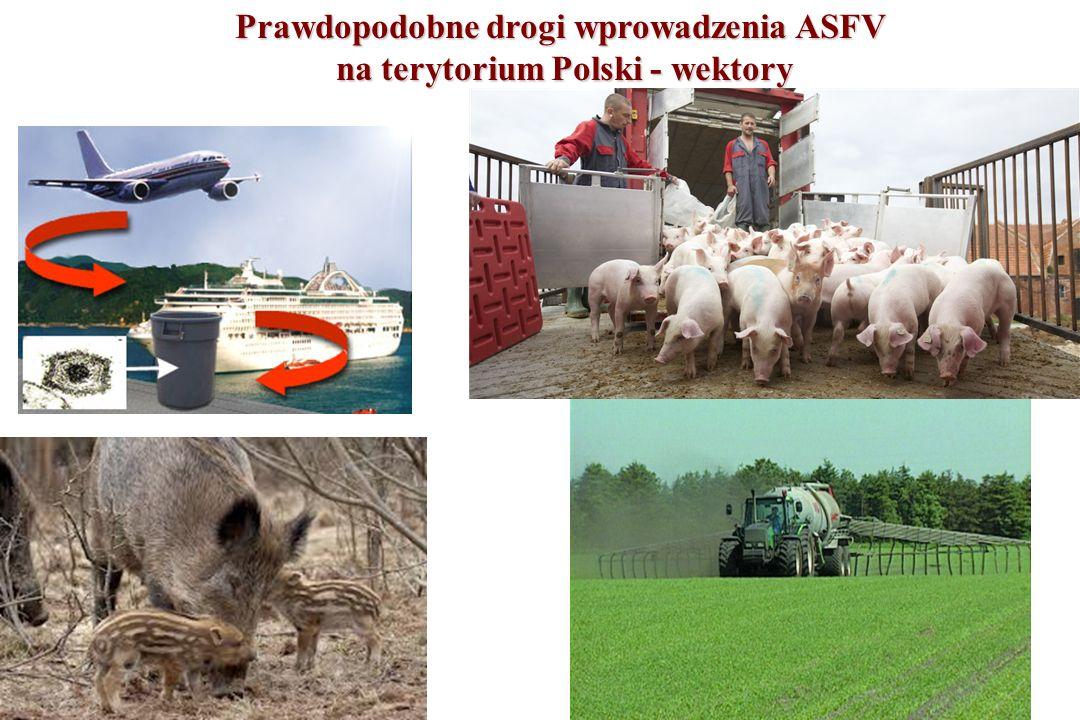 Prawdopodobne drogi wprowadzenia ASFV na terytorium Polski - wektory na terytorium Polski - wektory