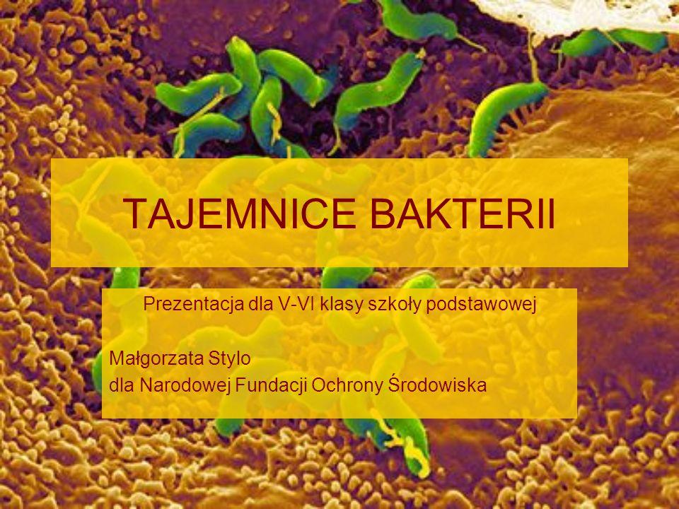 TAJEMNICE BAKTERII Prezentacja dla V-VI klasy szkoły podstawowej Małgorzata Stylo dla Narodowej Fundacji Ochrony Środowiska