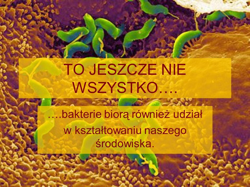 TO JESZCZE NIE WSZYSTKO…. ….bakterie biorą również udział w kształtowaniu naszego środowiska.