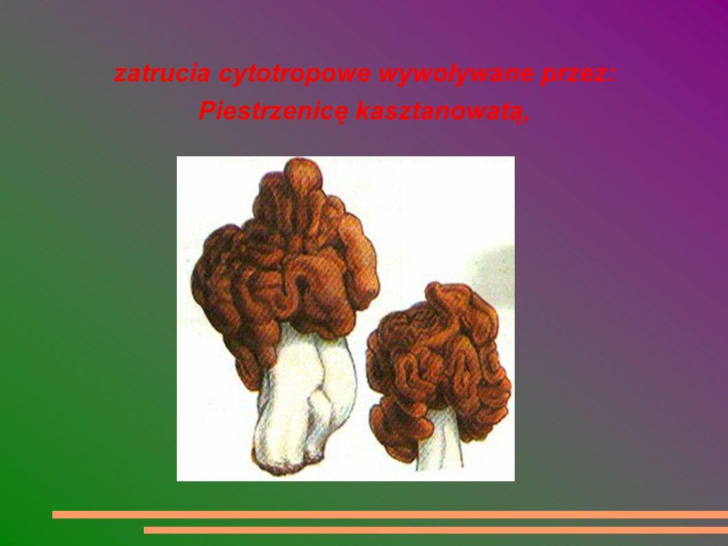 zatrucia cytotropowe wywoływane przez: Piestrzenicę kasztanowatą,