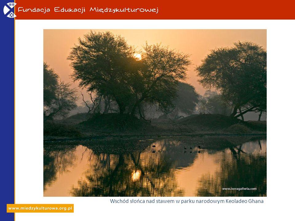 Wschód słońca nad stawem w parku narodowym Keoladeo Ghana