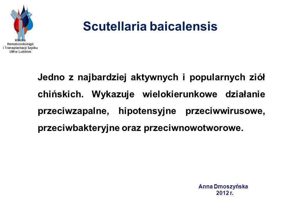 Anna Dmoszyńska 2012 r. Scutellaria baicalensis Jedno z najbardziej aktywnych i popularnych ziół chińskich. Wykazuje wielokierunkowe działanie przeciw