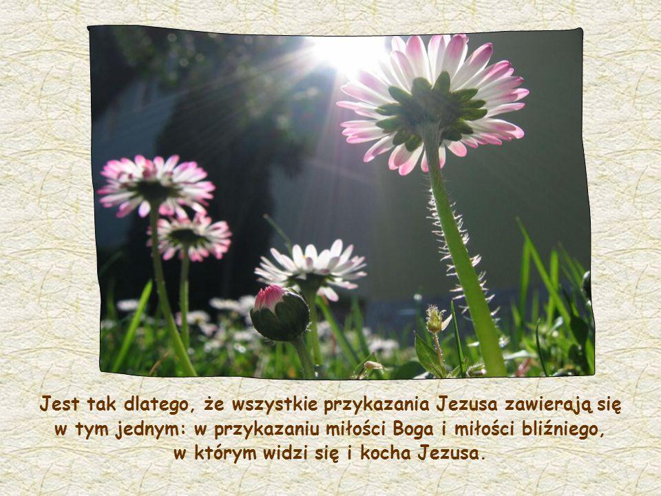 Słowo życia publikowane co miesiąc przez Ruch Focolari Tekst: Chiara Lubich, maj 1999 Grafika: Anna Lollo we współpracy z ks.