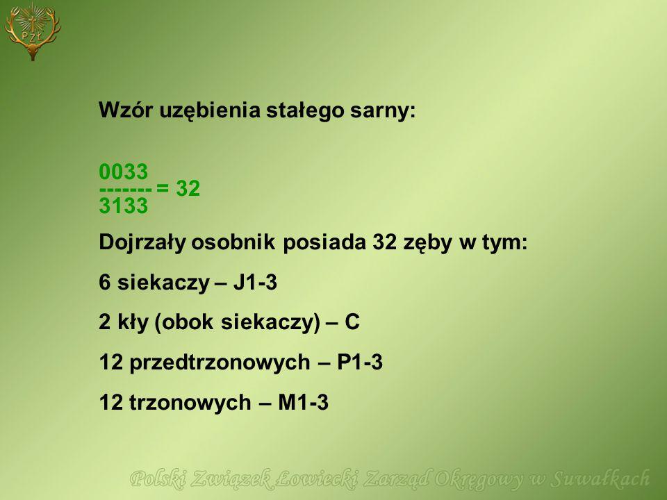 Wzór uzębienia stałego sarny: 0033 ------- = 32 3133 Dojrzały osobnik posiada 32 zęby w tym: 6 siekaczy – J1-3 2 kły (obok siekaczy) – C 12 przedtrzon