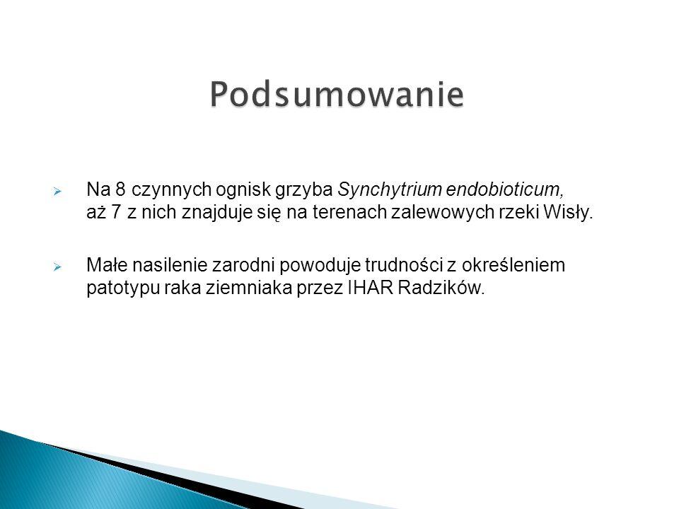  Na 8 czynnych ognisk grzyba Synchytrium endobioticum, aż 7 z nich znajduje się na terenach zalewowych rzeki Wisły.