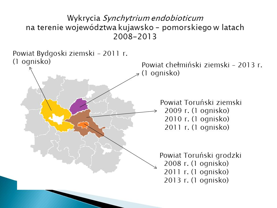 Powiat Bydgoski ziemski – 2011 r. (1 ognisko) Powiat Toruński ziemski 2009 r. (1 ognisko) 2010 r. (1 ognisko) 2011 r. (1 ognisko) Powiat Toruński grod
