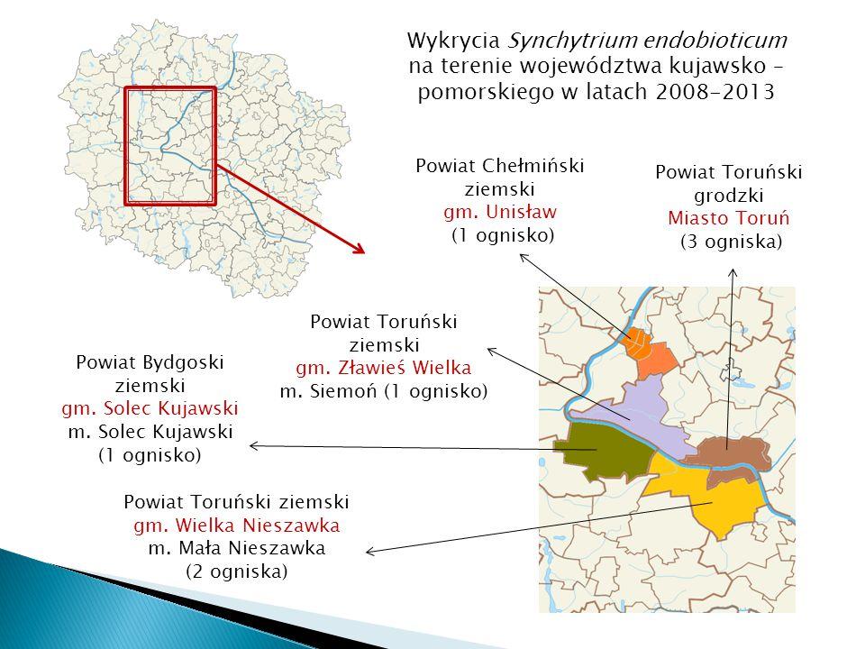 Powiat Toruński grodzki Miasto Toruń (3 ogniska) Powiat Toruński ziemski gm.