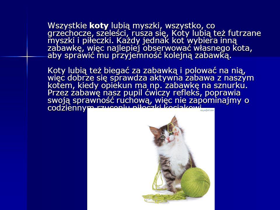 Wszystkie koty lubią myszki, wszystko, co grzechocze, szeleści, rusza się, Koty lubią też futrzane myszki i piłeczki. Każdy jednak kot wybiera inną za