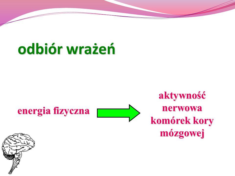 odbiór wrażeń energia fizyczna aktywność nerwowa komórek kory mózgowej