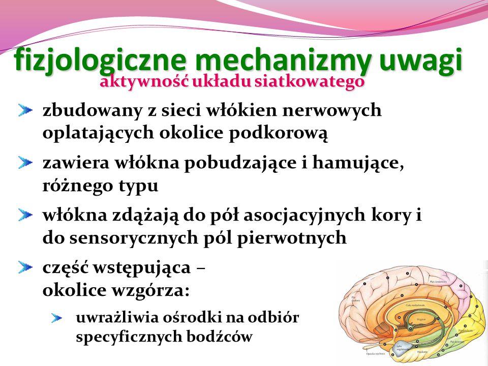 fizjologiczne mechanizmy uwagi aktywność układu siatkowatego zbudowany z sieci włókien nerwowych oplatających okolice podkorową zawiera włókna pobudza